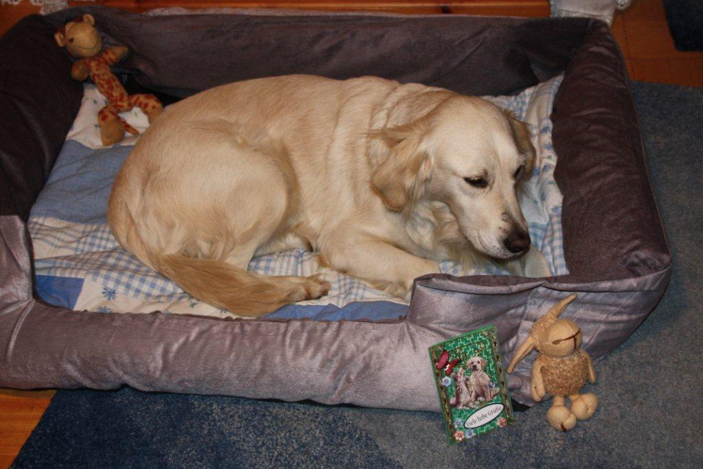 ein weihnachtsgeschenk f r ihren hund w stenwolf. Black Bedroom Furniture Sets. Home Design Ideas